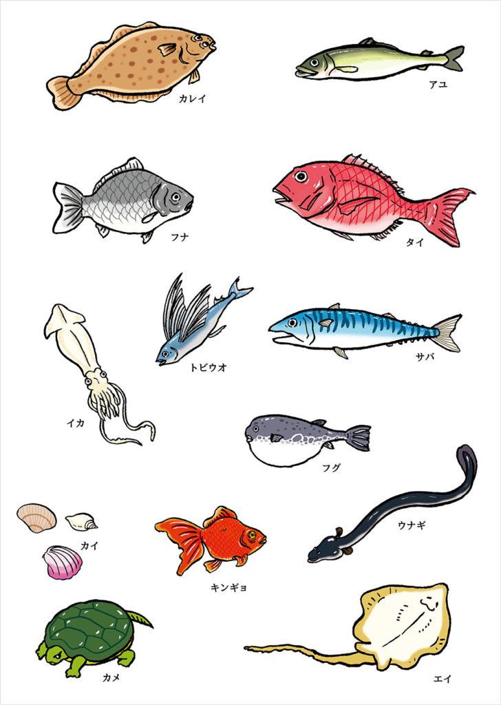 魚イラスト,魚,イカ,貝