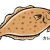 魚イラスト,カレイ