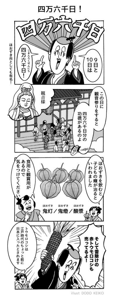 江戸,江戸イラスト,江戸漫画,江戸マンガ,4コママンガ,四万六千日.ほうずき市
